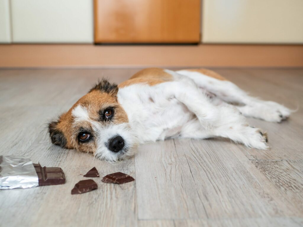 Amazing Facts About Dogs You May Not Know