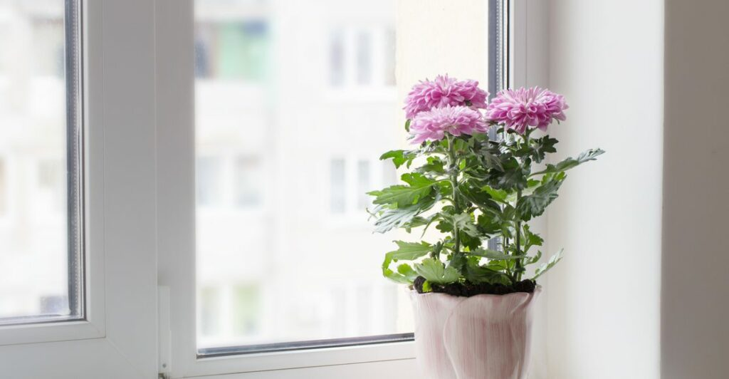 12 Of The Best Plants For Cleaner Indoor Air