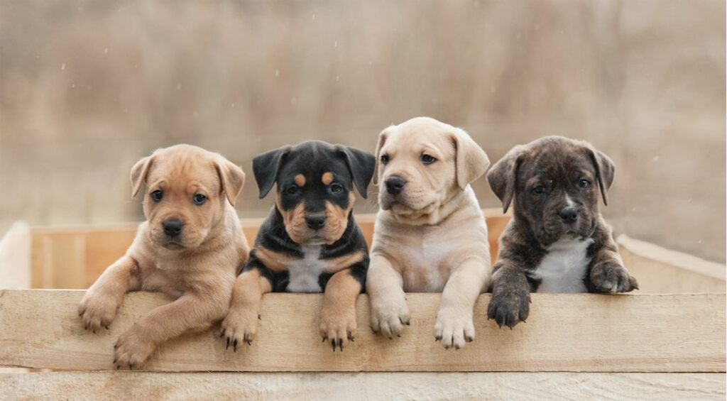 These Are the 100 Most Popular Dog Names